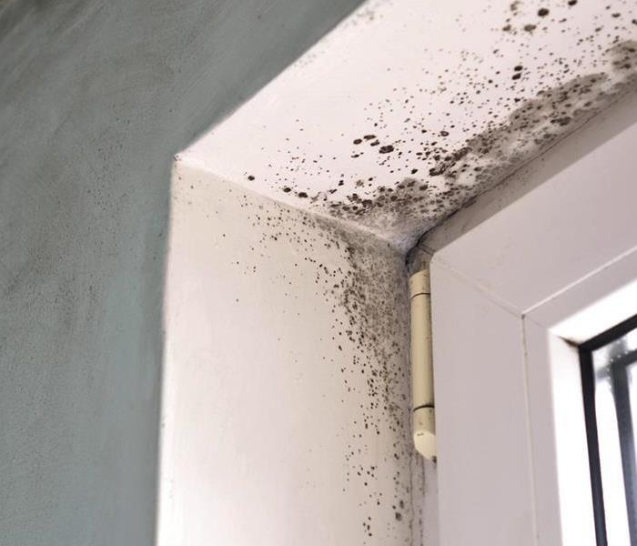 Mold near a window