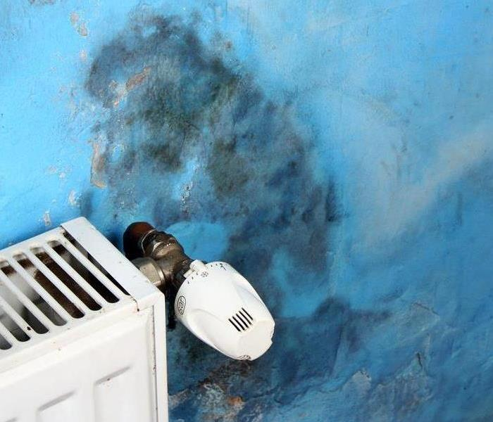 Mold Remediation Is Mold Lurking in Your Apartment?