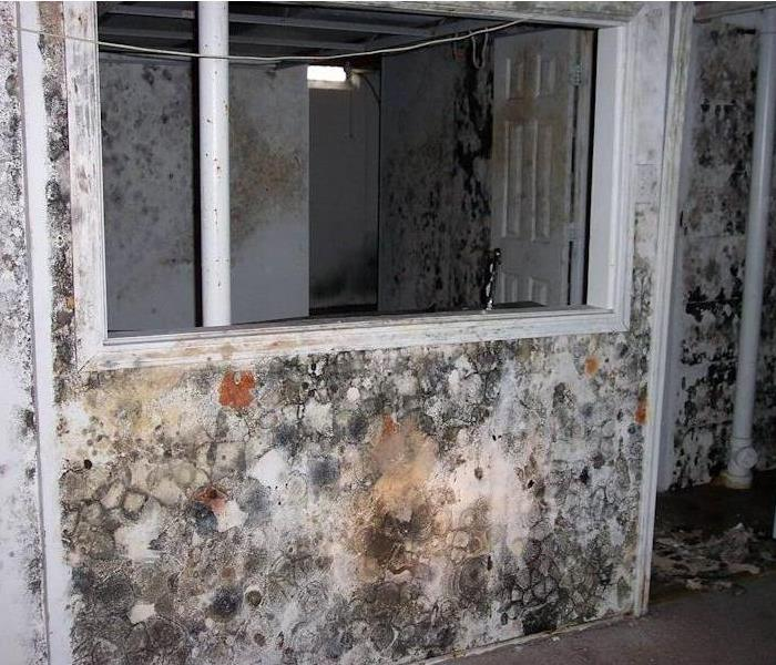 Interior wall of a house spotted with green, gray, and orange mold damage.